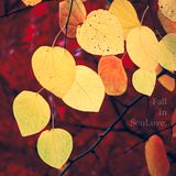 Fall In SouLove