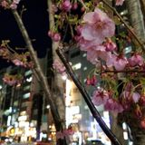 Tokyo ON #005: Hanami '17 Part I