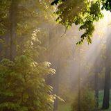 Forest Summer Breeze