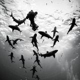 Oceans III