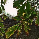 Mad Mongos Radio Soul - 24 - Plants Have Feelings