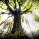 Elvendom_-_Cosmic Rainforest