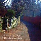 A Duck in a Tree 2014-09-20 | Airborne Fiddle Leaves