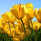 phritmo.Venus12@springtime