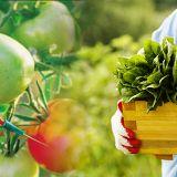 Familia y Salud: Cuidados en el posparto, alimento orgánicos, tipos de mujeres.