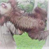 A Rabid Sloth
