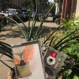 Houseplants Mixtape 01 - Side B - Houseplants