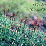 Wunderk1nd - A Tribute To ... Dominik Eulberg