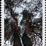Lesha Kubik - Ask the Tree