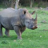 The Rhino Ultimatum - the fight is on to save the remaining Rhinos!