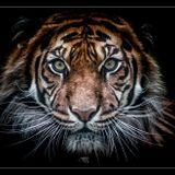 Especial parte 1- Tiger&Woods, previo a su presentación en Mex DF