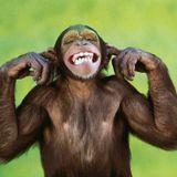 Monkey014