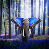 Dark Noise - The Metamorphosis Of Progressive Trance #1 [Dj SET]