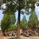 Oleanderstraat