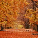autumn mixtape #8