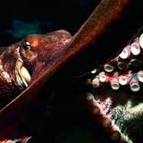 Eddie Santini revolution Octopuss-vol 10