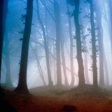 Turiya - Forest Dweller