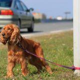 Protection Animale:  L'abandon, partie 1