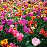 Primavera part1