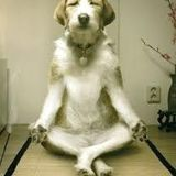 Studio Yoga Vidya - 3° appuntamento con Barbara Villa