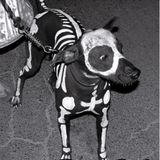Perro ki // dia de los muertos