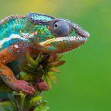 MARTIN VAN MORGEN-Never mind the Colours