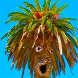 JouluBoogie - Baile Tropical