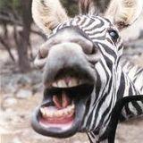 Rekless Zebra Vol. 2