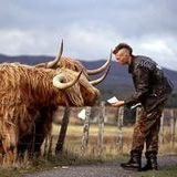 Cows And The Punks Who Ride 'Em