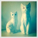 Flit Laholm_housecats