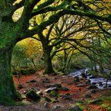 Darwin Day in Killarney National Park - A Talk By Kevin Corcoran