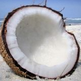 Woodzee - Coconut Beach Vol 1: Drift Into A Dream