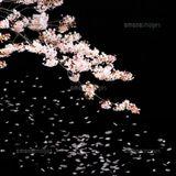 Shinpei Spring Mix