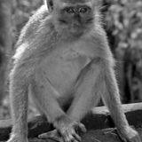 The Monkey's Paw by WW Jacobs