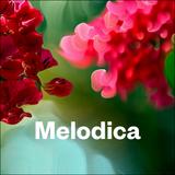 Melodica 11 September 2017