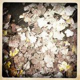 MonoStereo Autumn