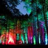 Golf Clap - Live @ Electric Forest 2014