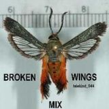 Telekind - 044 - Broken wings mix