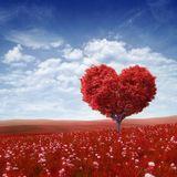 Let Love Live
