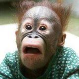 Monkeytime
