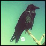 Dead Mexico - 31.12.2015 | mini-mix