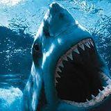 Shark Demment !!