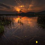 Balearic Mix #144 Fireflies After Hours