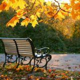 Late Autumn_Chúc mừng sinh nhật Bình >:D<