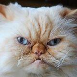 Foggy Miagi's Fall Meow Mix