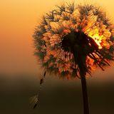 Flower Child - Death Bells at Dawn