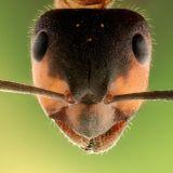 ZOOMagazín - 14.5.2017 - Mravenci siláci aneb zvedni nemožné