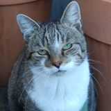Roamin' Cats FM No. 31  -LIVE-Horner, Sansao & Grahal