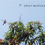 7 Dorados