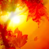 A Beautiful foggy November